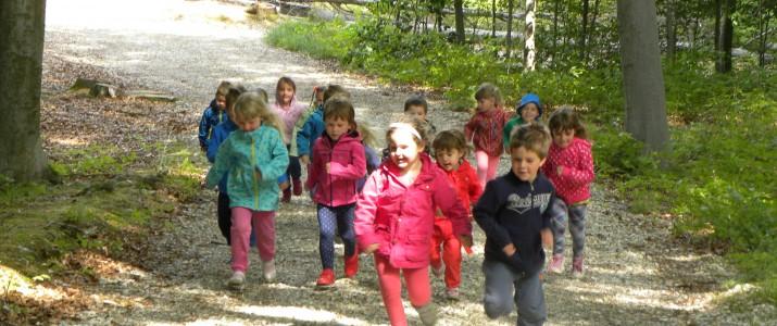 Gibalne igre v gozdu